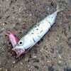 【釣行 6月15日】無限 ーInfinity Mackerelー