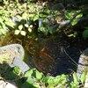 庭の手入れ日和、ヨトウムシ退治