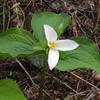 オレゴンに春を告げる、花と小鳥