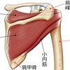 作業療法士の為のPNFアプローチ③【上肢機能改善のために外旋筋群を促通せよ】