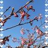 すごい風❣️でもお花は春の準備をしています。