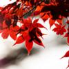 秋・尾形亀之助:切り取られた秋のワンシーン