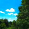 木々青く 名残惜しげに 雲を追う