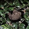 湖西市で蜂駆除!スズメバチの巣を駆除してきました!