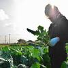 2021年2月Benoit 「 香川県の≪薫る農園≫」さんのご紹介です。