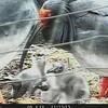 トキのひな4羽順調に成長
