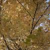 希望が丘公園に「秋」を撮影してきました-撮影時は雲一つない青空でとても気持ちの良い日でした-