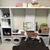 猫のお部屋のインテリア計画2018。ホワイトインテリア、猫カフェ風のインテリアにしたい。