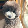 2021.2.17 【愛犬を見てるだけ】 ウトウトしてるEmmaを見てるだけです Uno1ワンチャンネル宇野樹より