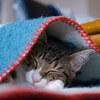 RICOH GXR で猫の写真を