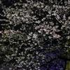 4/8 団地の桜