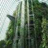 シンガポールの植物園ガーデンズ・バイ・ザ・ベイに行ってきた