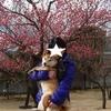 柴犬チャー、小田原フラワーパークへ行ってみた!!