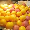 甘いモノ嫌いが好きな甘いモノ。夜市グルメ「地瓜球」と「木瓜牛奶」