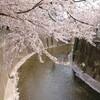 平成最後の桜かな?家族でポタってラーメンで締める。