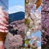 吉野山×桜の絶景を巡る、1泊2日モデルコース