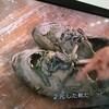 少林サッカーの靴