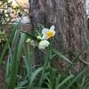 花散歩で癒された金曜日