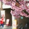 まだこんなには咲いてない京都市内(2018.3.24)