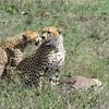 【タンザニア旅行記】セレンゲティの南でサファリ!見た動物まとめ