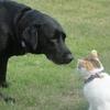 猫と犬、どっちも飼いたい!共存は可能?私の友達の場合はこうでした。