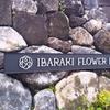 いばらきフラワーパークがリニューアルオープン!一面バラで良い香り!広くて楽しみ方も色々