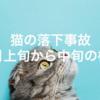 【猫の落下事故】3月の上旬から中旬までの様子