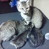 続・出会い。ママ猫ミーコ。