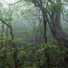 (昔話)屋久島⑥ ウィルソン株から縄文杉までの美しい風景 ~縄文杉までの道~