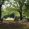 代々木公園ランニング〜残暑の中にもほんの少しだけ秋の気配〜