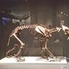 大英自然史博物館展に行って来たよ!その5
