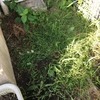 庭の片隅も使える☆彡 水菜 小松菜の種まき