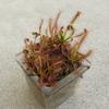何か植物を育てたい?