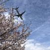 航空会社の破綻と破綻回避 (1)