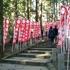 のんびり正月と羽黒山神社に初詣