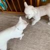 ☆白犬と白猫の再会☆