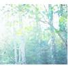 『あわじの森の写真展 in 淡路島マンモス』も延期です(;_;)
