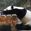 「知ってる?熊猫って笹食べるの苦手らしいよ」
