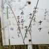 万葉歌碑を訪ねて(その549)―奈良市法蓮佐保山 万葉の苑(52)―万葉集 巻二十 四四三一