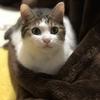 【猫ブログ】猫ちゃんが好きな色って??
