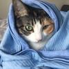 【愛猫日記】毎日アンヌさん#56