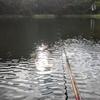 富沢の池36(土木作業もしましたよ)