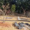 霊園風景 その18 「‥‥冬枯れの樹木墓地」