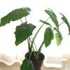 こうして植物は増える