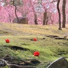京都の梅スポット城南宮の神苑はしだれ梅が見事【期間限定】御朱印