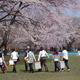 もう一度行きたい桜の名所【弘前城】(後編)