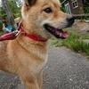 保護犬 シン^^
