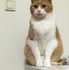【猫ブログ】たかしは夢の中?