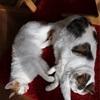 猫と日常(或いは非日常)