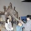 世界に1つの剣竜骨格化石、初公開…恐竜博物館